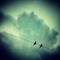 שנאת חינם – סיבת המחלוקת