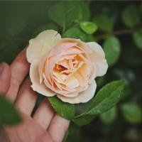 פורים – נתינה היא הדרך לשמחה