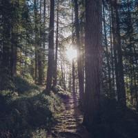 כל ירידה – צורך עלייה היא